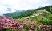 合歡山北峰步道:DSC_2346.jpg