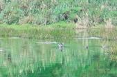 夢幻湖生態保護區~:DSC_5157.jpg