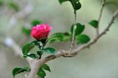 花卉試驗中心.:DSC_0876.jpg