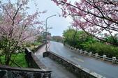 草山竹子湖~:DSC_3056.jpg