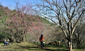 石門水庫梅園:DSC_8476.jpg