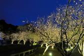 陽明山國家公園:_DSC5853.jpg