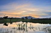 社子島濕地~:_DSC5063.jpg