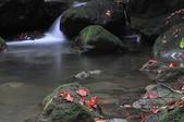 青春嶺(陽峰古道)楓紅~:_DSC9883.jpg