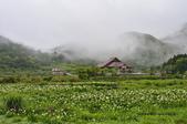 草山竹子湖~:_DSC6594.jpg