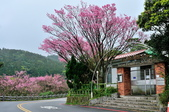 草山竹子湖~:DSC_3103.jpg