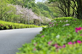 陽明山國家公園:_DSC1163.jpg