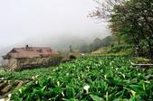 草山竹子湖~:DSC_3308.jpg