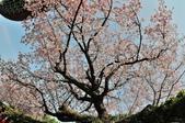 三芝 天元宮:DSC_5192.jpg