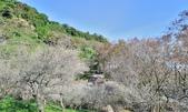 石門水庫梅園:DSC_8562.jpg