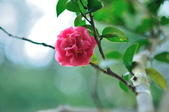 花卉試驗中心.:DSC_0870.jpg