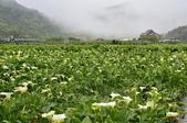 草山竹子湖~:_DSC6621.jpg