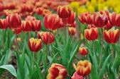 花卉試驗中心.:DSC_0717.jpg