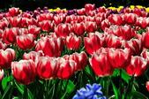 花卉試驗中心.:DSC_0746.jpg
