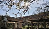 石門水庫梅園:DSC_8458.jpg