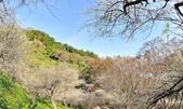 石門水庫梅園:DSC_8498.jpg