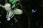飛羽類~:DSC_2123.jpg