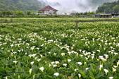 草山竹子湖~:_DSC6438.jpg