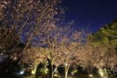 陽明山國家公園:_DSC5860.jpg