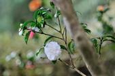 花卉試驗中心.:DSC_0874.jpg