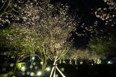 陽明山國家公園:_DSC5867.jpg