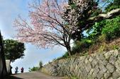 十八份拐圳步道:DSC_3256.jpg