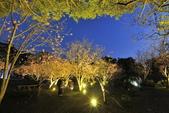 陽明山國家公園:_DSC6074.jpg