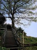 十八份拐圳步道:DSC04623.jpg