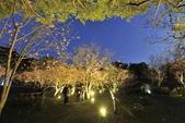 陽明山國家公園:_DSC6073.jpg