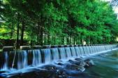 雲山   水人造生態濕地:DSC_3644.jpg