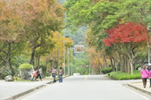 花東-砂卡礑溪步道:_DSC5954.jpg