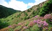 合歡山北峰步道:DSC_2362.jpg