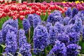 花卉試驗中心.:DSC_0740.jpg