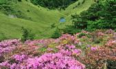 合歡山北峰步道:DSC_2389.jpg