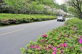 陽明山國家公園:_DSC2069.jpg