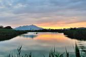 社子島濕地~:DSC_5537.jpg