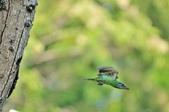福志公園五色鳥:DSC_0146.jpg