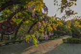 陽明山國家公園:_DSC1851.jpg