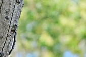 福志公園五色鳥:DSC_2766.jpg