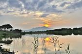 社子島濕地~:_DSC9159.jpg