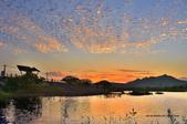 社子島濕地~:_DSC1261.jpg