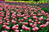 花卉試驗中心.:DSC_0769.jpg