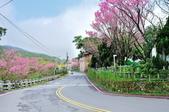 草山竹子湖~:DSC_3284.jpg