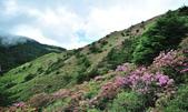 合歡山北峰步道:DSC_2324.jpg