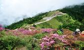 合歡山北峰步道:DSC_2331.jpg