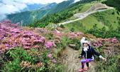 合歡山北峰步道:DSC_2352.jpg
