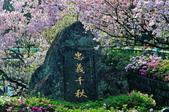 三芝 天元宮:DSC_5052.jpg