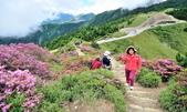 合歡山北峰步道:DSC_2365.jpg