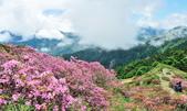 合歡山北峰步道:DSC_2377.jpg
