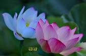 花花草草集~:_DSC3642.jpg